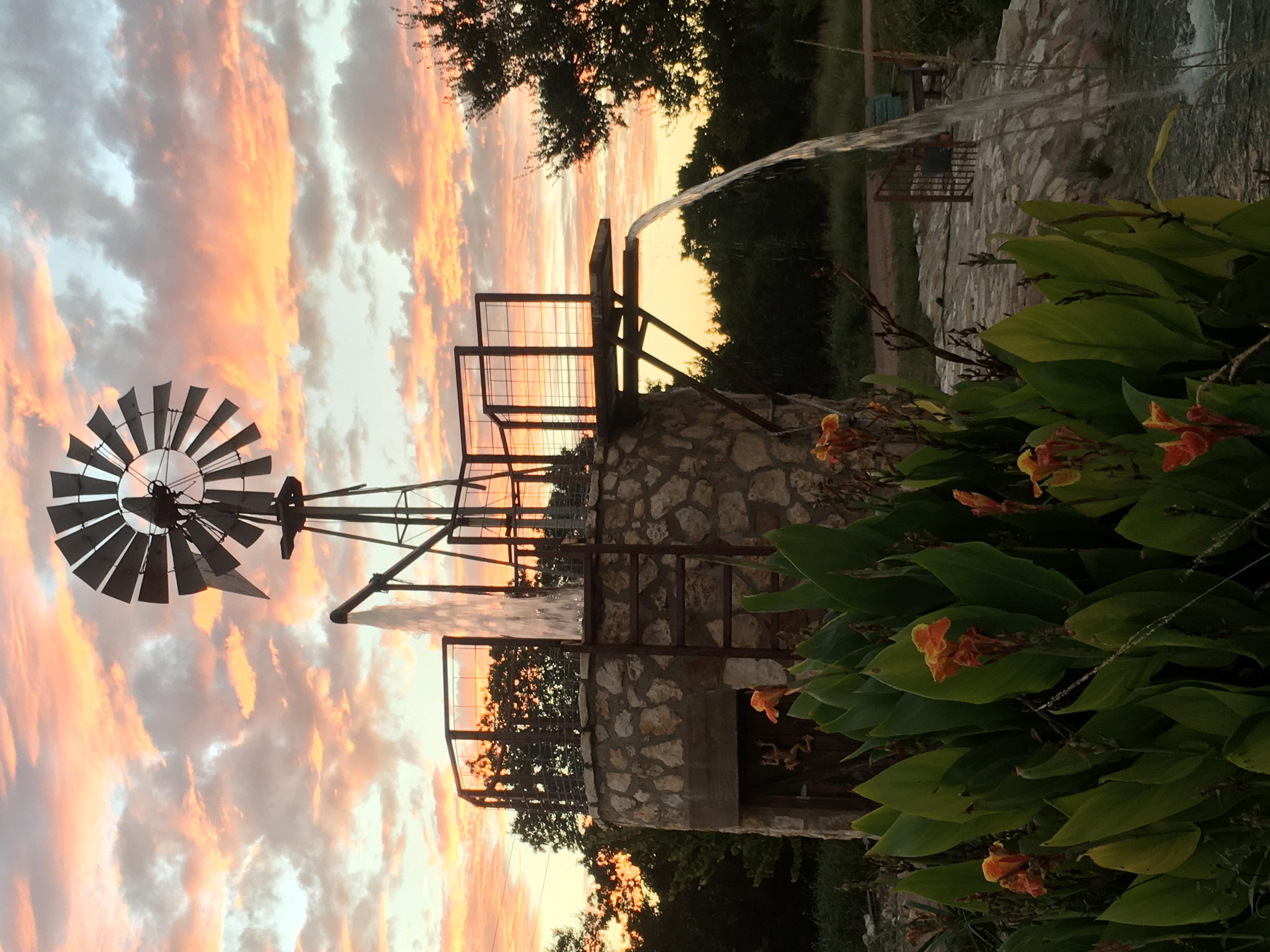 Dan - Windmill_0888