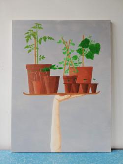 'Tray of Seedlings'