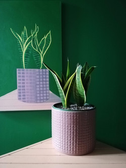 'Snake Plant on a Pink Table'