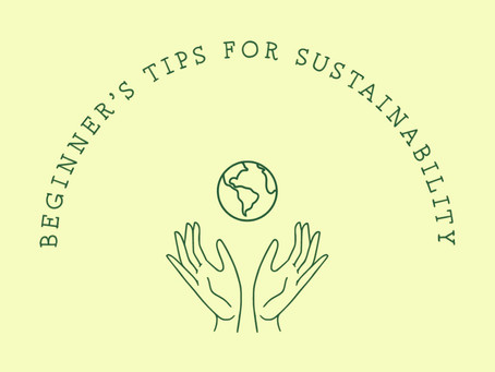 Sustainability For Beginners: 5 tips