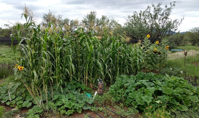 The Permaculture Garden