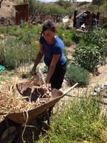Garlic Harvest Deep Dirt Farm
