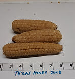 Texas Honey June_edited.jpg