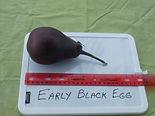 Early Black Egg.JPG