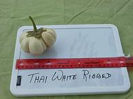 Thai White Ribbed.JPG