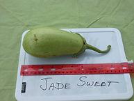 Jade Sweet.JPG