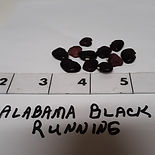 Alabama%20Black%20Running_edited.jpg