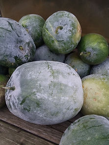 Chinese Wintermelon.jpg