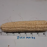 Zulu Maize_edited.jpg