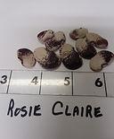 Rosie%20Claire_edited.jpg