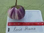 Rosa Bianca.JPG