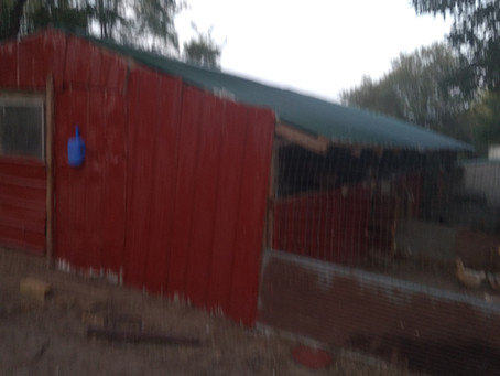 Constructing an Economical and Efficient Poultry  Building