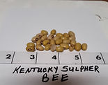 Kentucky%20Sulphur%20Bee_edited.jpg