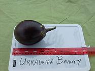 Ukrainian Beauty.JPG