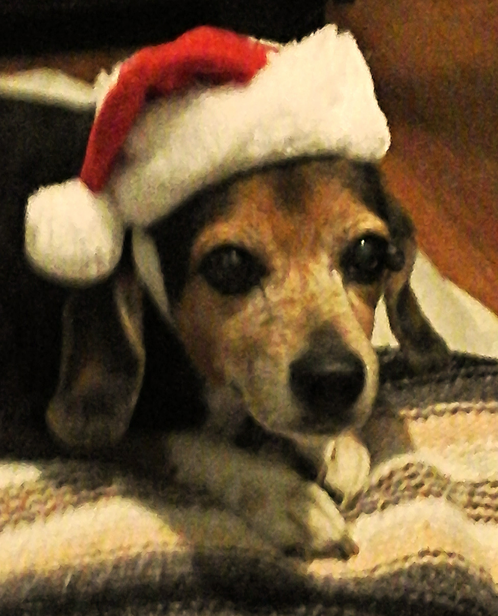 Happy Holidays from CoCo too !