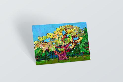 Nottingham Postcard of Major Oak Tree in Sherwood Forest