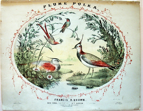 SHEET MUSIC –PLUME POLKA – BEAUTIFUL CHROMOLITHO - 1855