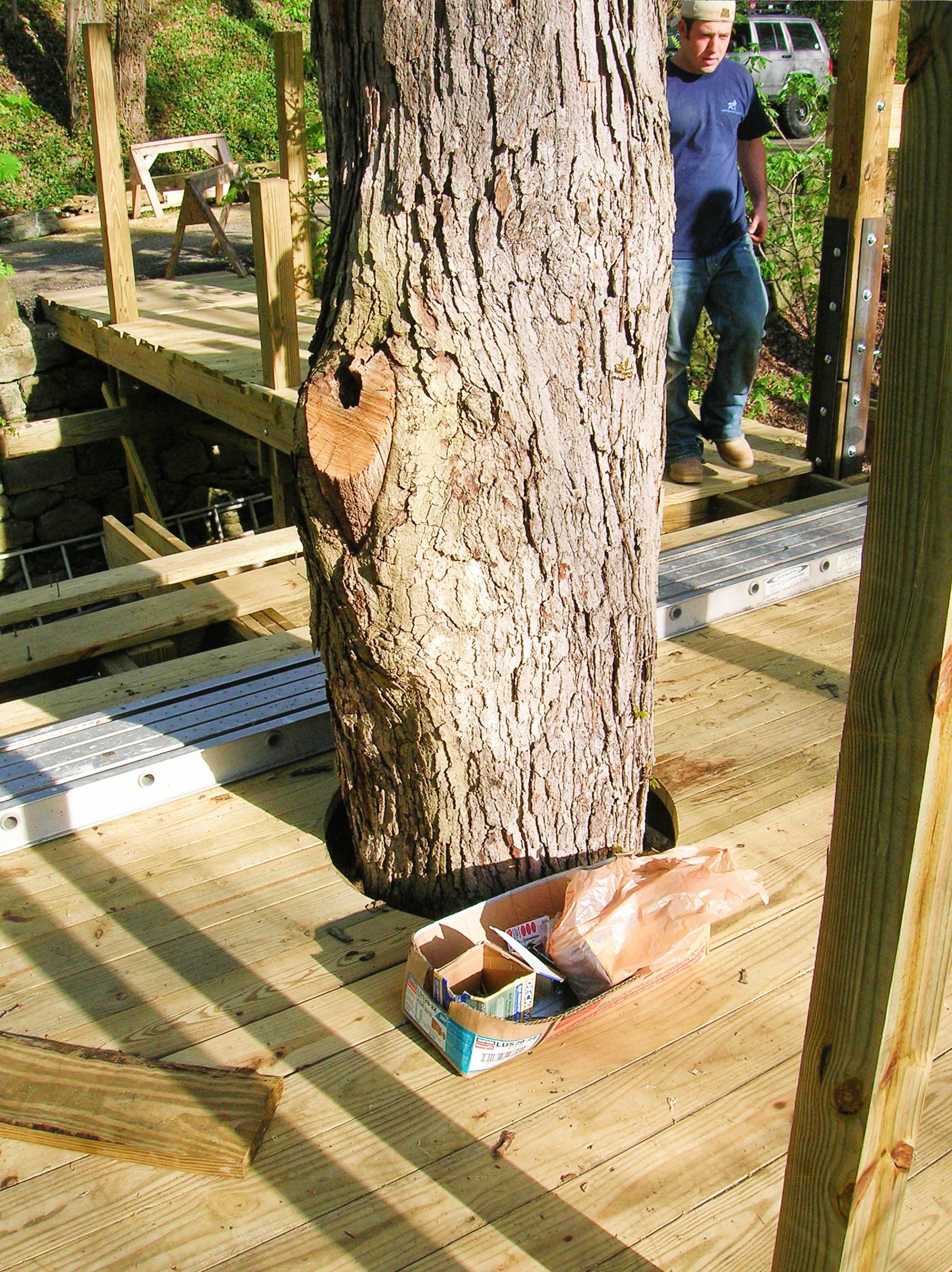 existing tree