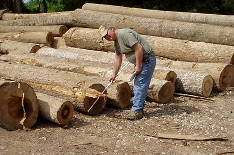 Tony Lee Grading Logs