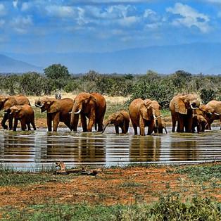 elephant-1065632_1920.jpg