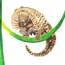 P is for pangolin!