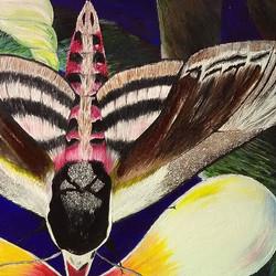 A privet hawk moth