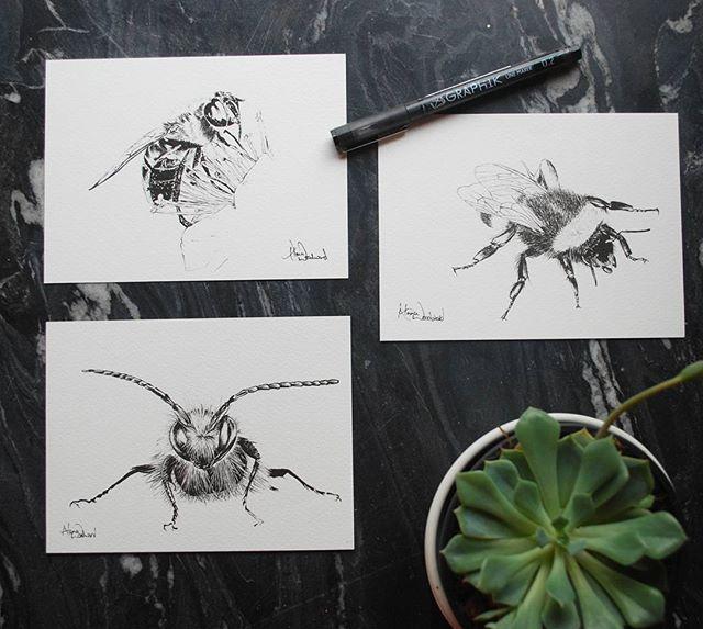 Honey, bumble and mason bees