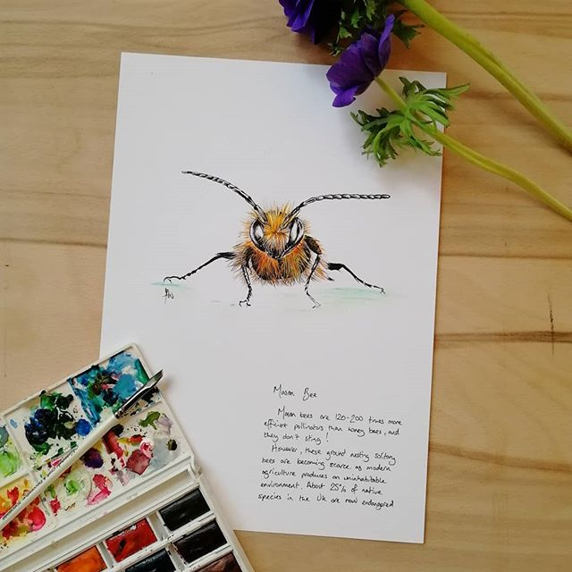 Watercolour mason bee