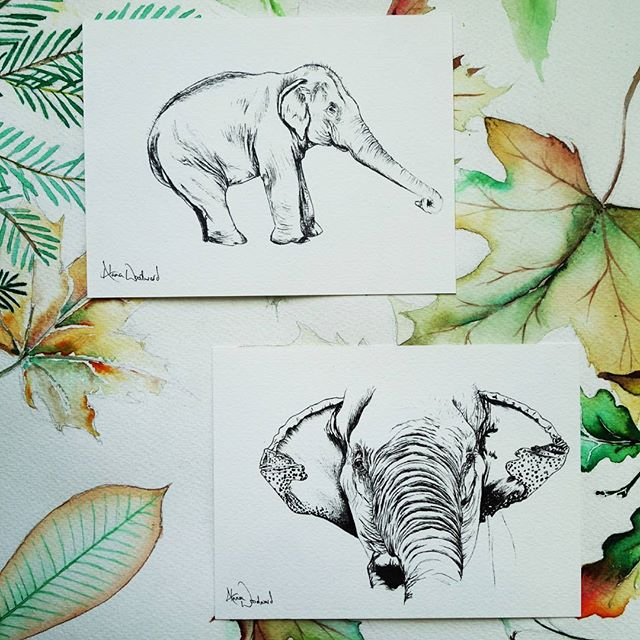 Asian elephant pen and ink drawings