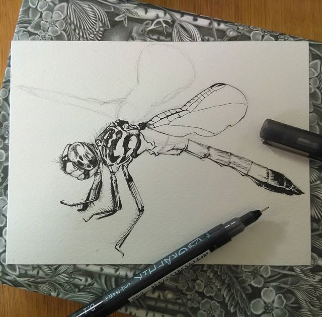 A dragonfly pen and ink in progress