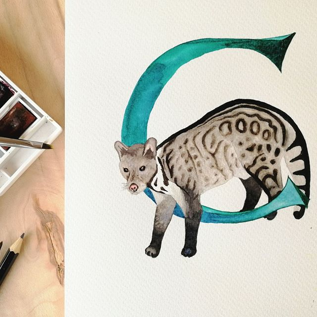 C is for.....civet