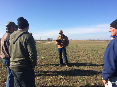 Taking a Look at Cover Crops