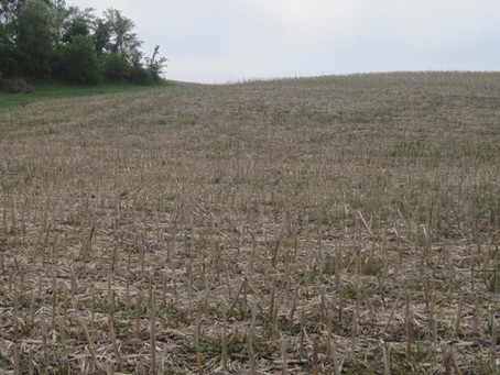 Local Farmer Uses Cover Crops to Combat Erosion