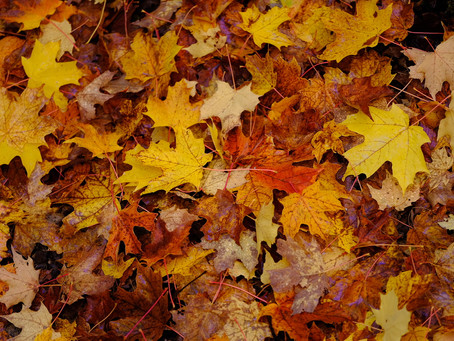 Keep Leaves out of Gutters for Water Quality
