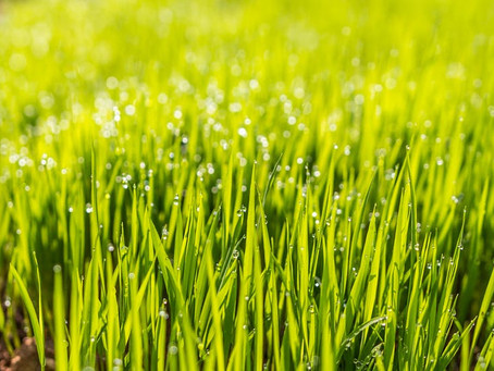 Spring Lawn Care Tips for Clean Water