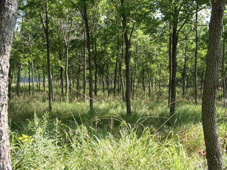 Funding Available for Planting Trees!