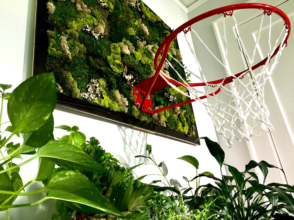 Living Backboard w Plants 2.jpg