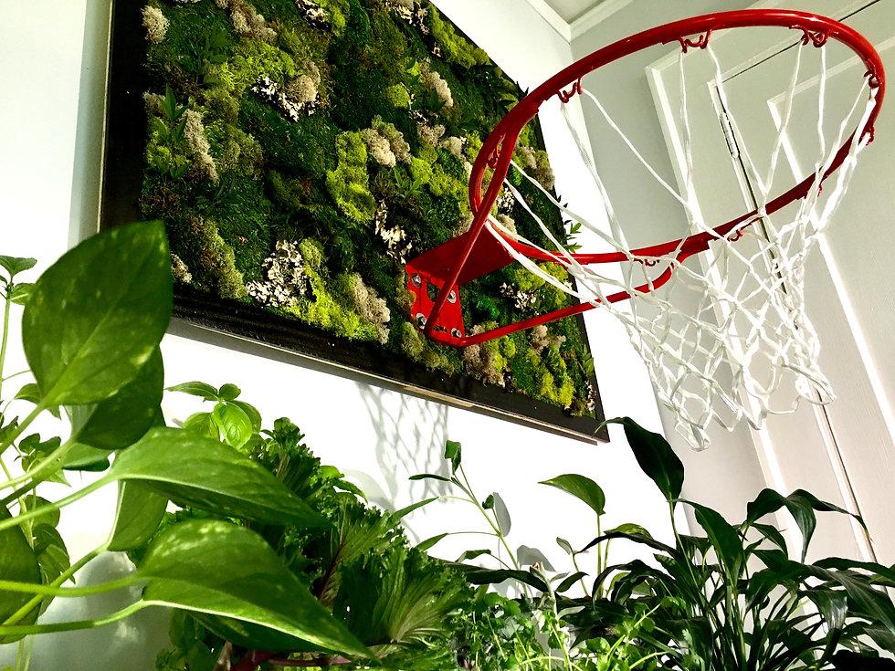 Living Backboard w Plants 2.jpg