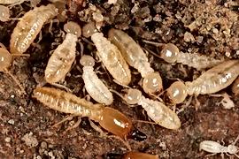 Wichita falls home inspection termite