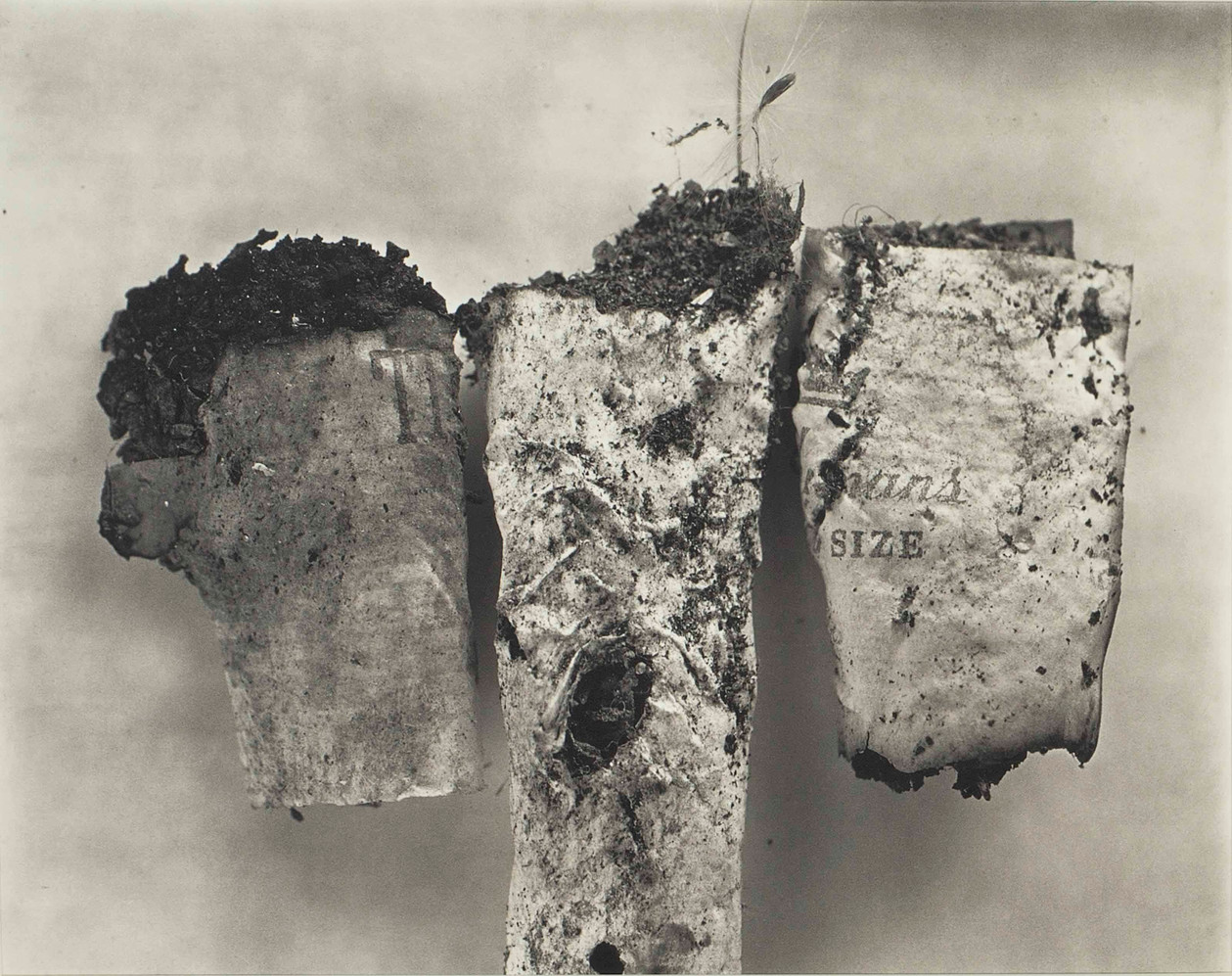 Irving Penn - Natureza Morta