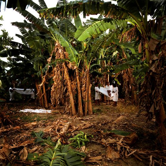"""""""A Plantação de Banana"""""""
