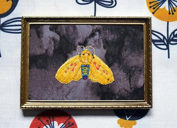 Australian Yellow Tiger Moth