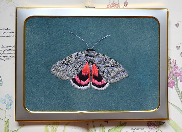 Pink Underwing