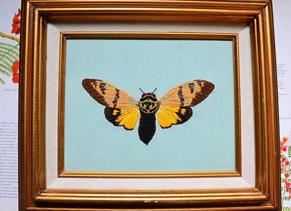 Cicada Festiva