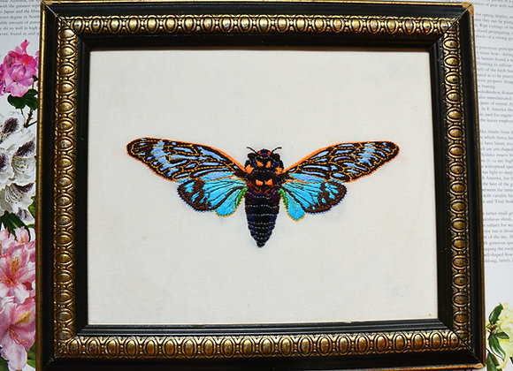 Cicada Splendida