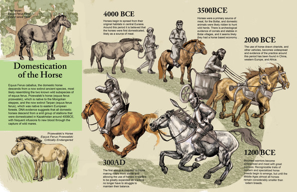 The Domestication of the Horse