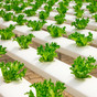 THE NEXT MAJOR PIECE IN THE SUSTAINABILITY PUZZLE: THE GLOBAL FOOD CHAIN