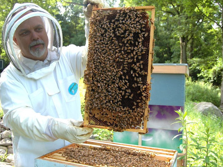 HOW IOT BEEHIVES ARE HELPING SECURE THE WORLD'S FOOD SUPPLY