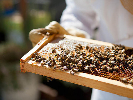 FAIRMONT HOTELS MAXIMIZES ITS GLOBAL OCCUPANCY AND WELCOMES OVER 2 MILLION WELL-TRAVELLED BEES