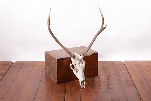 Mask & horns